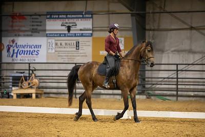 Horse 190