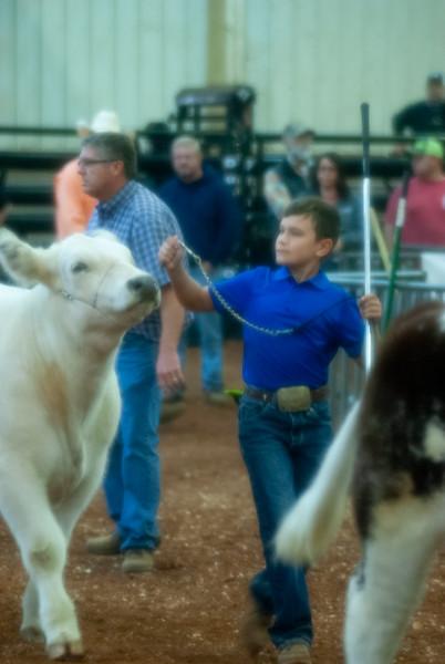 EYO Cattle Saturday
