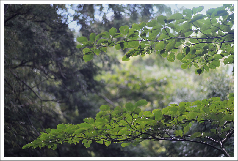 Layers of green