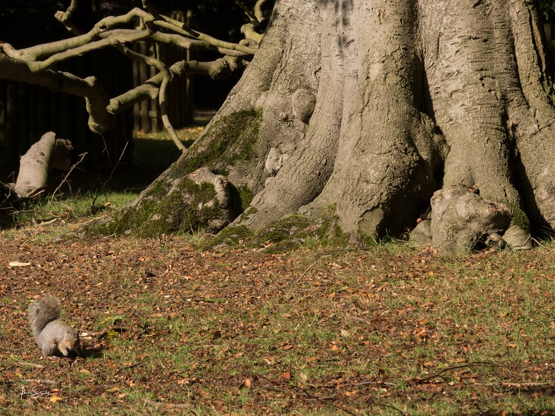 Dunham Massey September 18-32.jpg