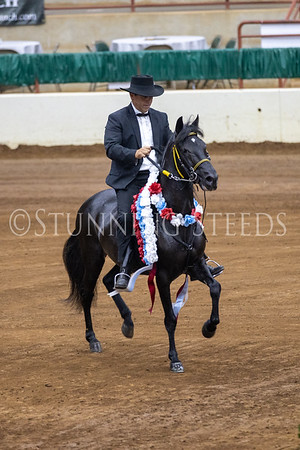128 Performance Amateur Geldings Championship