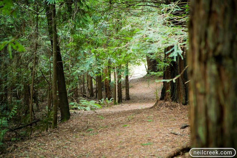 creek-140819-135.jpg