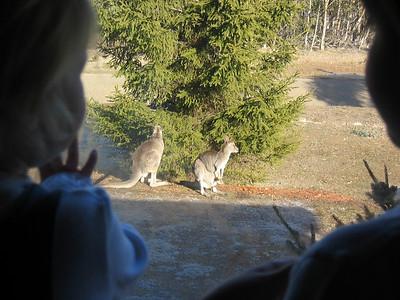 Day 9 Kangaroo and driving