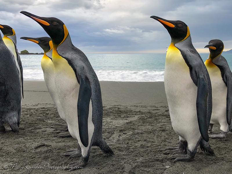 Antarctic-159