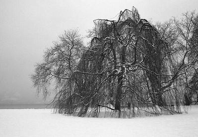 Frozen Tree - Cham, Switzerland