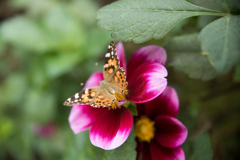 Chicago Botanic Garden 034.jpg