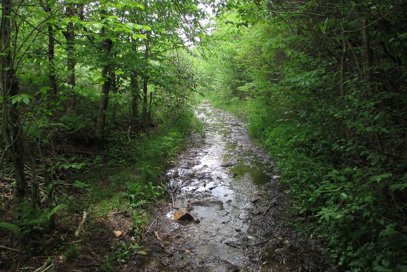 Graveyard Ridge Trail (5,600')