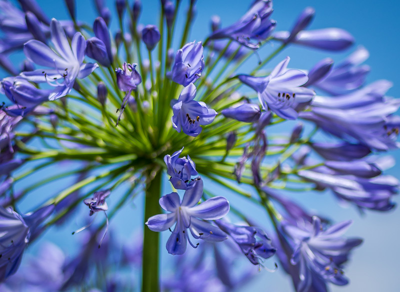 McGovern-Centennial-Gardens-9294.jpg