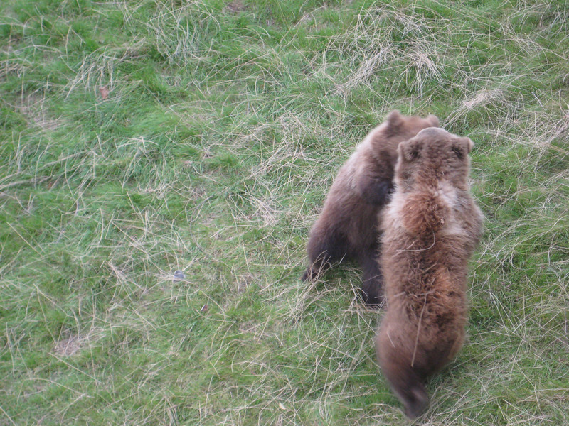 bears_06.jpg