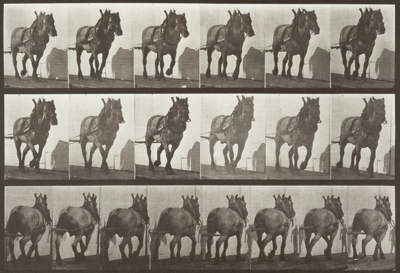 Horse Dusel hauling (Animal Locomotion, 1887, plate 566)