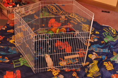 Cleaning the Boy's Stinky Cage