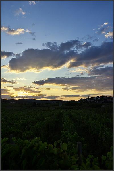 Západ slunce mezi vinicemi v Lumbardì