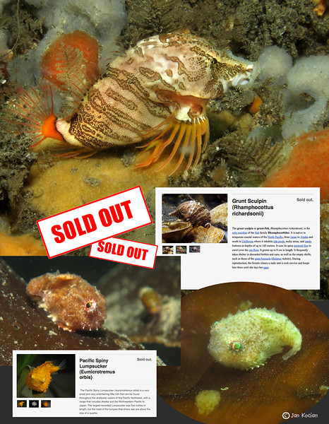 9.13.12 critter sale Sold out S.jpg