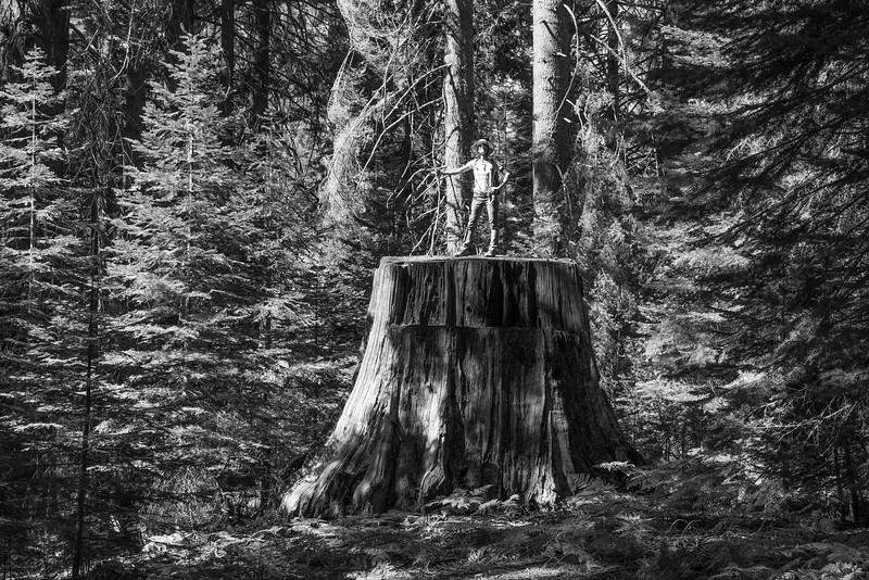 Giant Stump.jpg