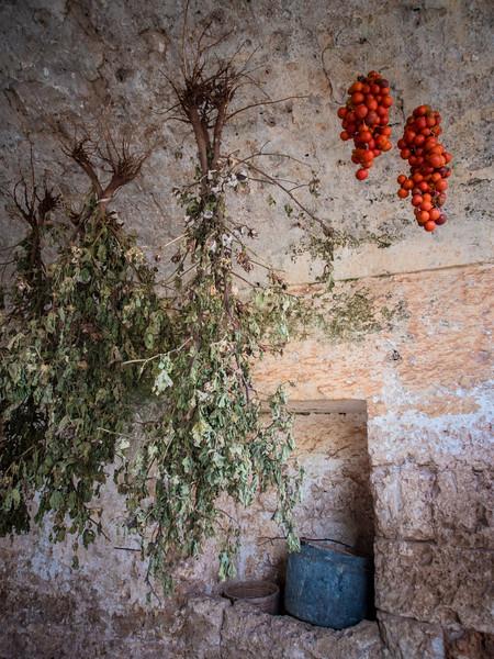 salamina cotton and tomatoes.jpg