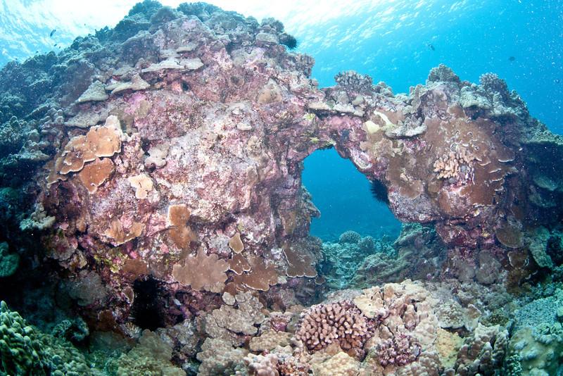 Coral Arch 2.jpg