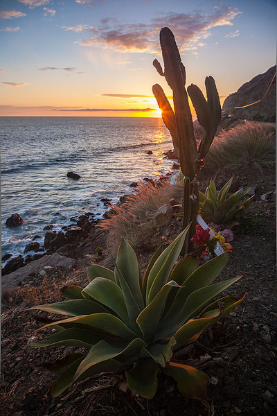Cactus Roadside Memorial Pacific Coast Hwy Sunset Malibu