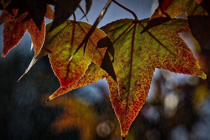 November 4 - Autumn leaf.jpg