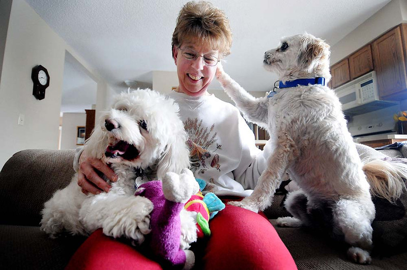 . Joyce Stevens snuggles with her foster dog Sunny, left, an 11 year-old a Bichon Frise at her home in Maple Grove on Sunday, April 21, 2013. Sunny is a former Every Dog Counts rescue dog from Indianapolis. Stevens feels that she is the last stepping stone to Sunny\'s forever home.  (Pioneer Press: Sherri LaRose-Chiglo)