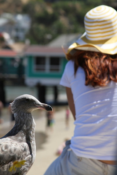 Catalina Island © Erin Suggett Photography