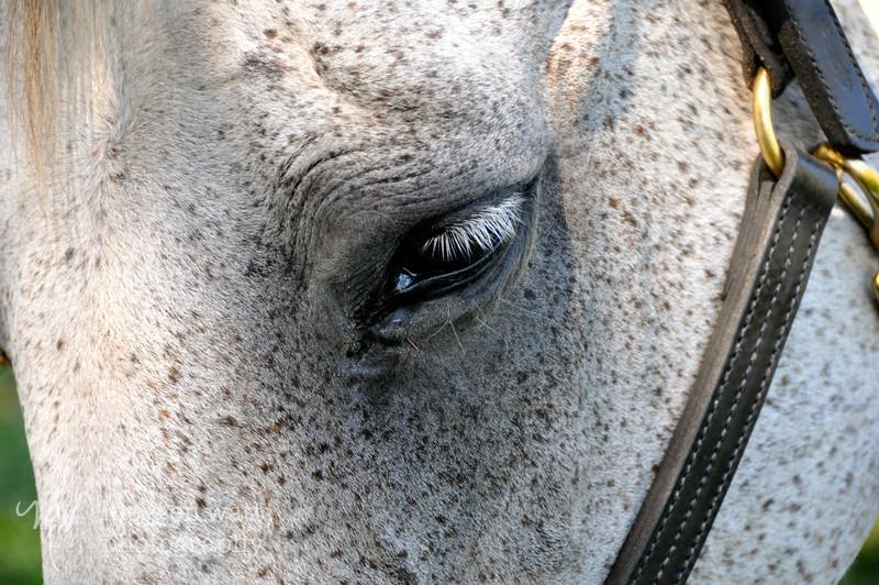 EB&Horses-029.jpg