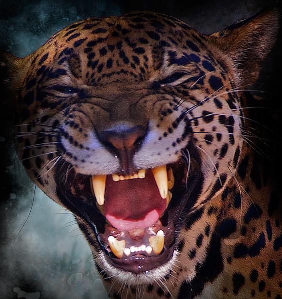 Laughing Jaguar