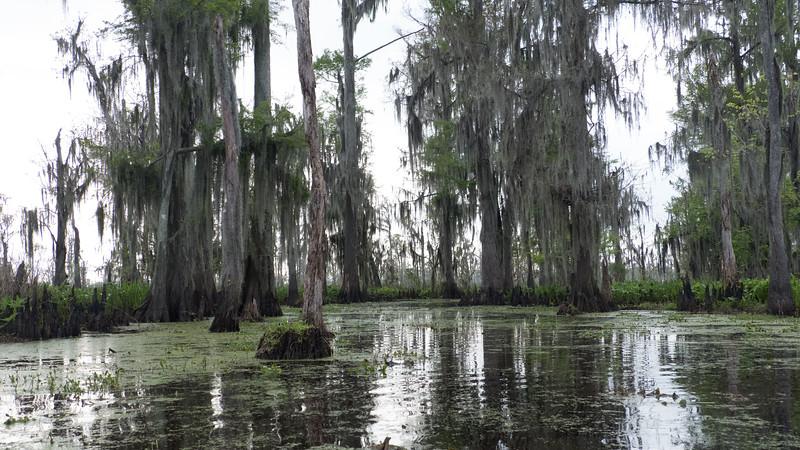 ManchacSwamp-6928.jpg