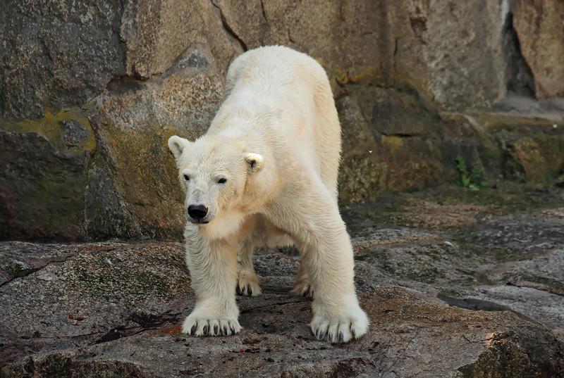 1D3L7358 zoo.jpg