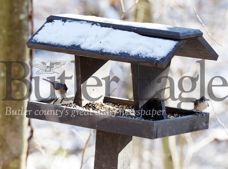 1226_FOC_Birdfeeder_7.jpg