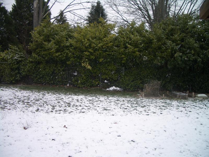 Our snowy back yard