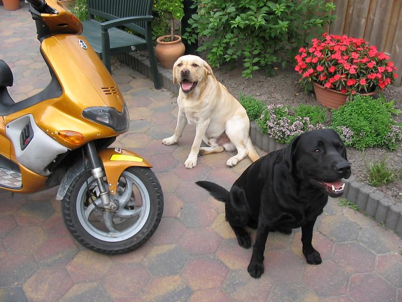 Paddy en Finnie juli 2003