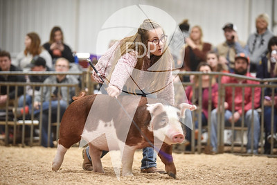 Hereford Ring Shots