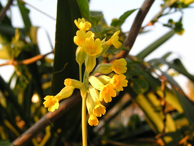 2004-04-21 Garten