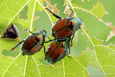Plant and Garden Pests
