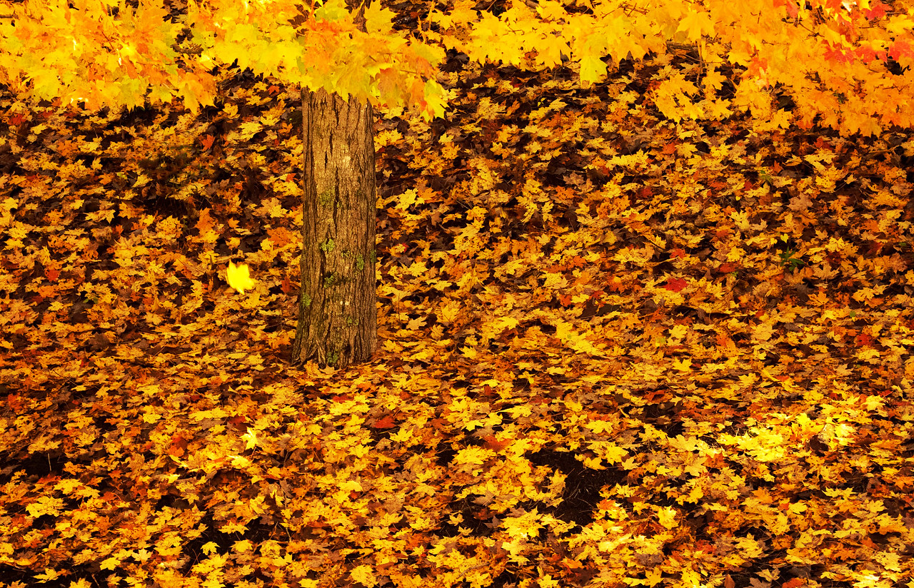 One Falling Leaf