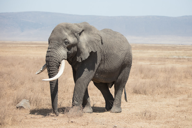 Africa - 101816 - 7770.jpg