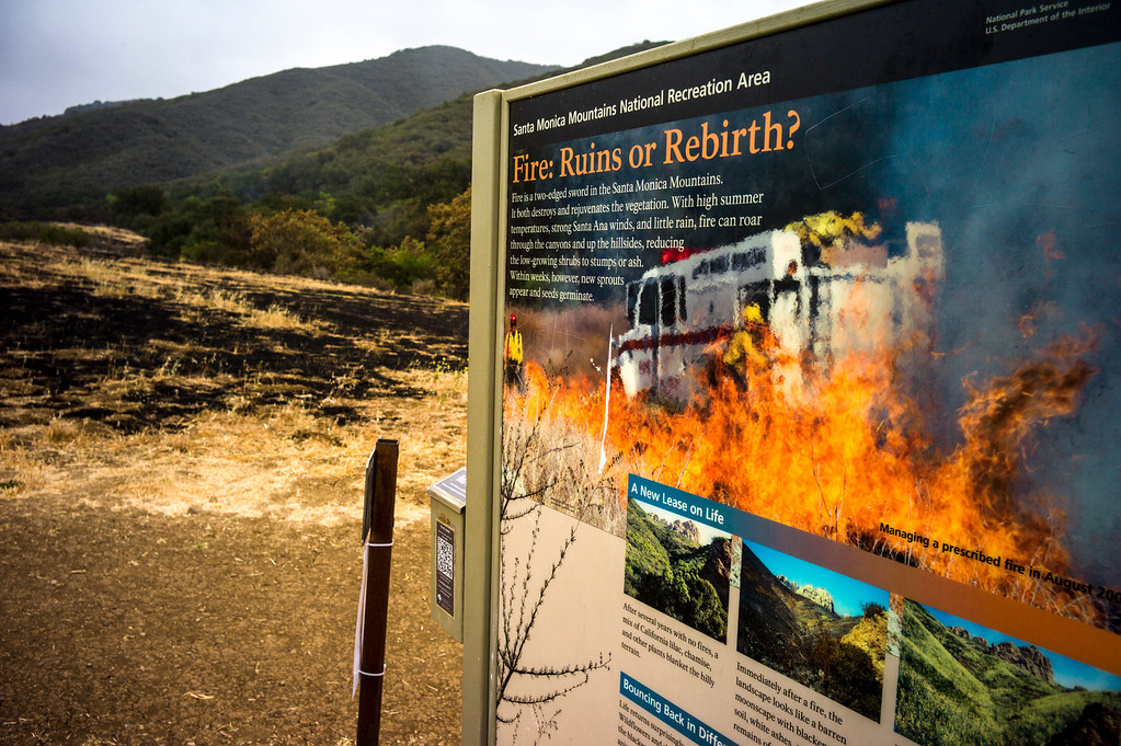 . Scorched earth burned by the Springs fire along Protrero road near Hidden Valley Sunday.  Cool damp weather has helped crews begin to get the upper hand on the fire which has burned more than 10,000 acres.  Photo by David Crane/Los Angeles Daily News.