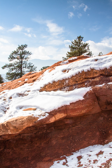 trees on red rocks decorated by snow