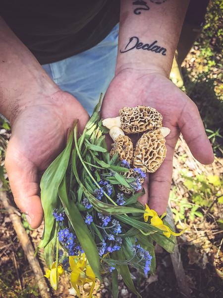 foraged ingredients in hand 2.jpg