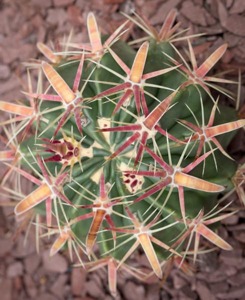 Kurt's Flora (30 of 41).jpg