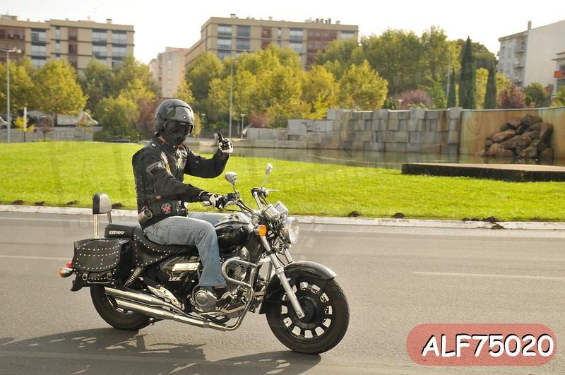 ALF75020.jpg