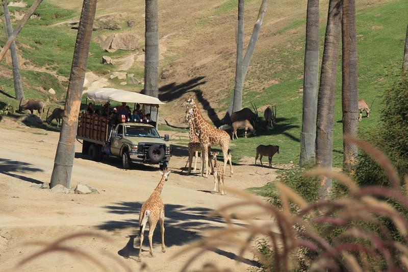 San Diego wild animal pakr 201700055.jpg