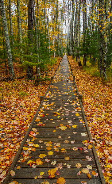 Boardwalk,Sieur de Monts,Acadia .jpg