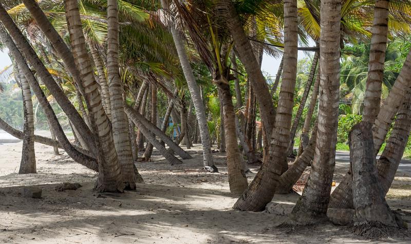 Palms on the beach at Sauteurs