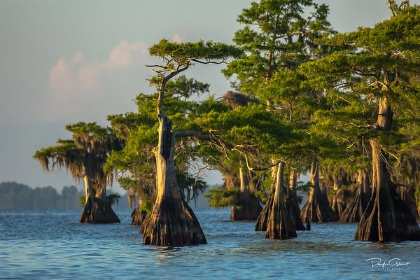 Blue Cypress Lake, Florida