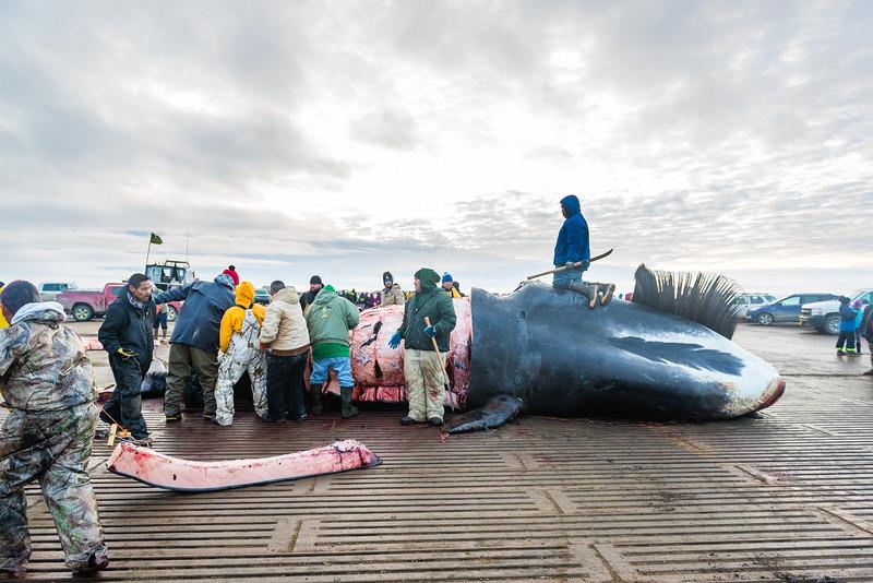 Utqiagvik Whaling-6104862-Juno Kim-nw.jpg