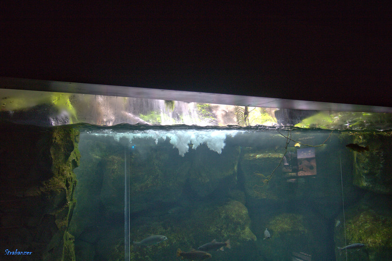 Tennessee Aquarium Chattanooga, TN, 07/13/2019 This work is licensed under a Creative Commons Attribution- NonCommercial 4.0 International License