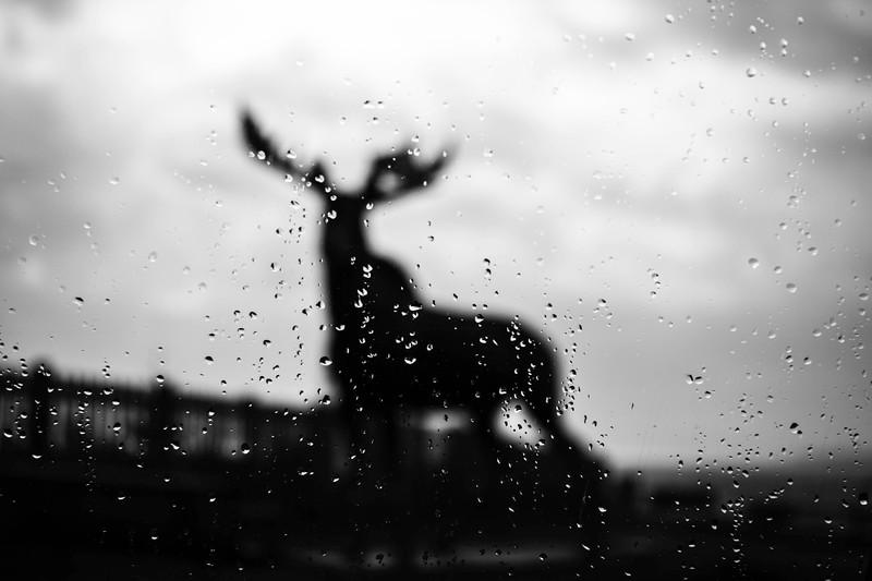 BW Raindrop Cow Bay Moosefb.jpg