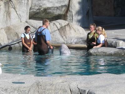Touchin'a whale touchin' a whale...