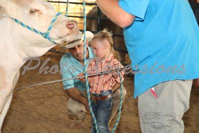Heifer Show ring A